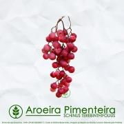 Sementes de Aroeira Pimenteira / Pimenta Rosa (Frutífera) - Schinus terebinthifolius - Mundo das Sementes