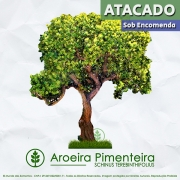 Sementes de Aroeira Pimenteira / Pimenta Rosa - Schinus terebinthifolius - Árvore - Atacado - Mundo das Sementes