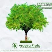 Sementes de Aroeira Preta Verdadeira - Myracrodruon urundeuva - Atacado - Mundo das Sementes