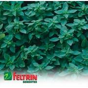 Sementes de Manjericão Verde Fino Francês - Feltrin