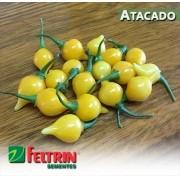 Sementes de Pimenta Guadalajara - Atacado - Feltrin