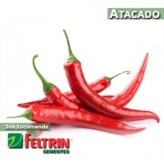 Sementes de Pimenta Malagueta - Atacado - Feltrin