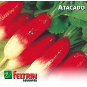 Sementes de Rabanete Serrano - Atacado - Feltrin