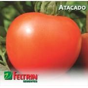 Sementes de Tomate Cris - Atacado - Feltrin