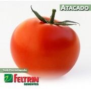 Sementes de Tomate Damião - Atacado - Feltrin