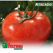 Sementes de Tomate Gaúcho Melhorado - Atacado - Feltrin