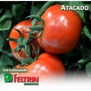 Sementes de Tomate Janaína - Atacado - Feltrin