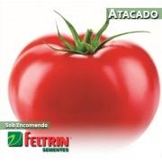 Sementes de Tomate Olavo - Atacado - Feltrin