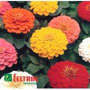 Sementes de Zinnia Dobrada Sortida - Zinnia Dahliaflora - Feltrin