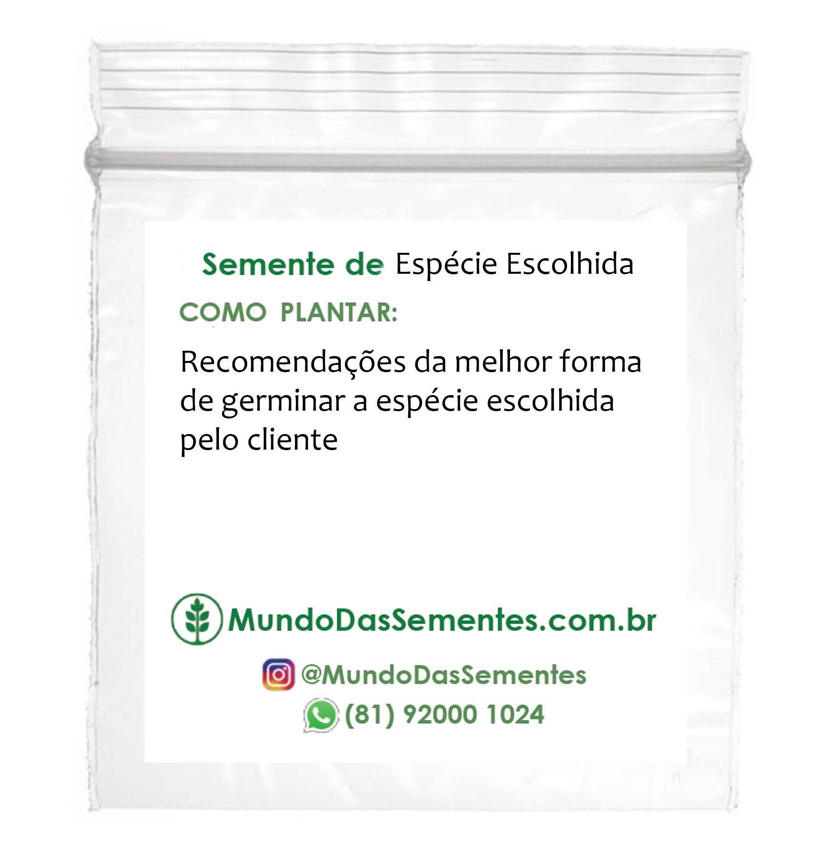 20 Brindes Ecológicos com Sementes – Ziplock 4x4cm com Etiqueta Personalizada - Mundo das Sementes