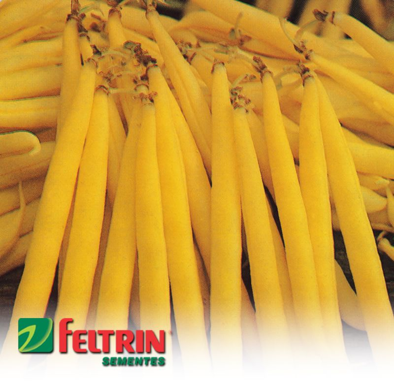 Sementes de Feijão Vicenza Amarelo Baixo - Atacado -  Feltrin