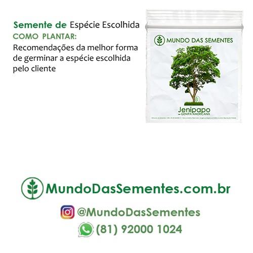Brindes Ecológicos com Sementes - com Cartão (10x10 cm) Personalizado - Mundo das Sementes