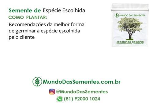 Brindes Ecológicos com Sementes - com Cartão (10x15 cm) Personalizado - Mundo das Sementes