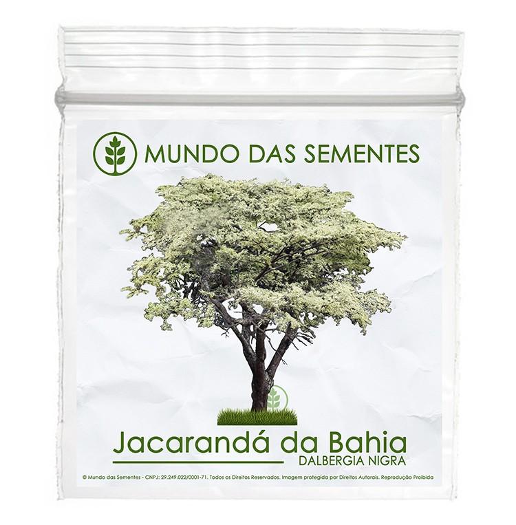 Brindes Ecológicos com Sementes de Jacarandá Da Bahia - Dalbergia nigra - Mundo das Sementes