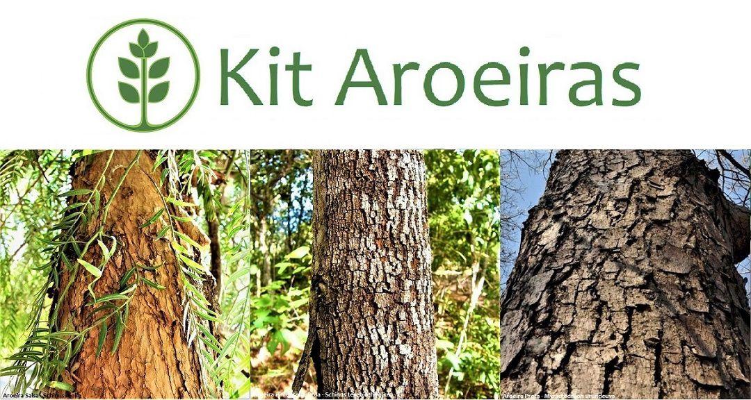 Kit Aroeiras - 90 Sementes - Mundo das Sementes