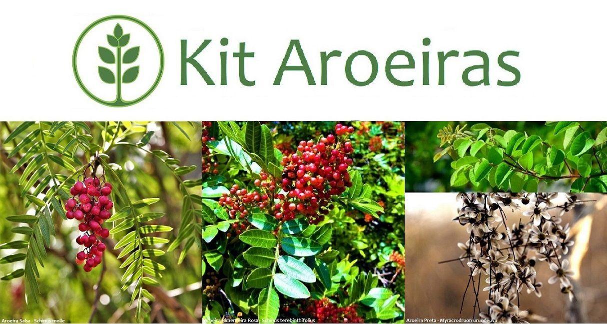 Kit Aroeiras - 150 Sementes - Mundo das Sementes