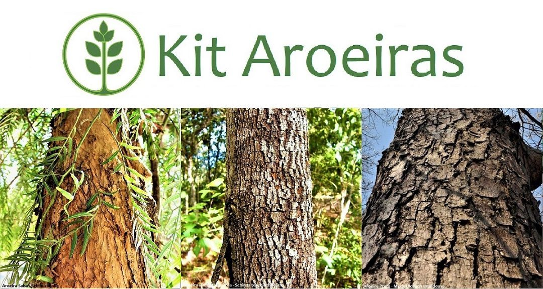 Kit Aroeiras - 300 Sementes - Mundo das Sementes