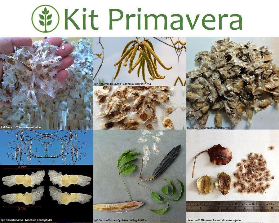 Kit Primavera - 120 Sementes - Mundo das Sementes