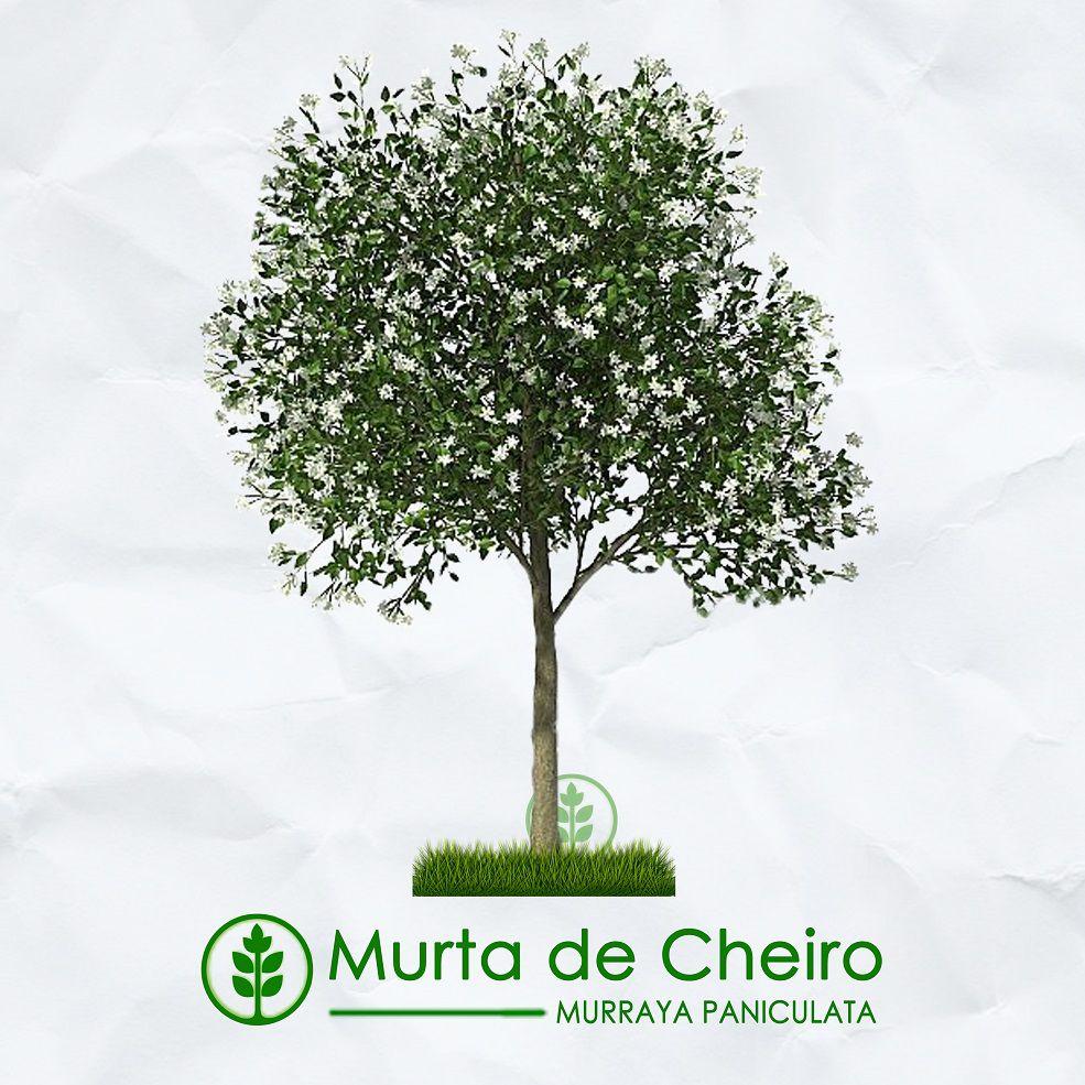Kit Verão - 180 Sementes de Árvores Nativas e Exóticas - Mundo das Sementes