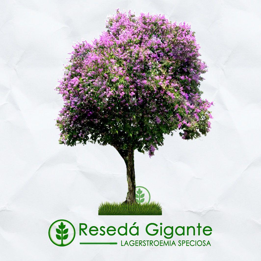 Kit Verão - 600 Sementes de Árvores Nativas e Exóticas - Mundo das Sementes