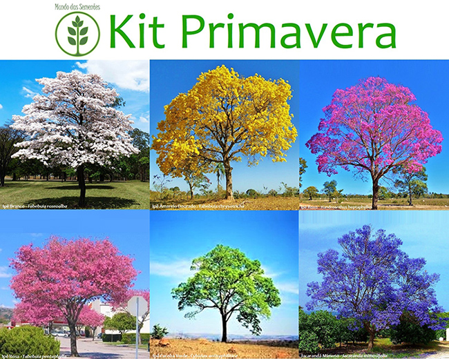 Pré Venda - Kit Primavera - 180 Sementes - Mundo das Sementes
