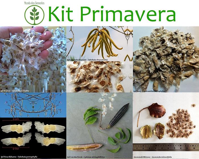 Pré Venda - Kit Primavera - 600 Sementes - Mundo das Sementes