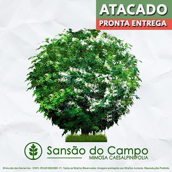 PRÉ VENDA - Sementes de Sansão do Campo (Arbusto) - Mimosa caesalpiniifolia - Pronta Entrega - Mundo das Sementes