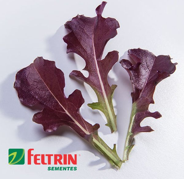 Sementes de Alface Betânia Mimosa Roxa Salad Bowl - Feltrin