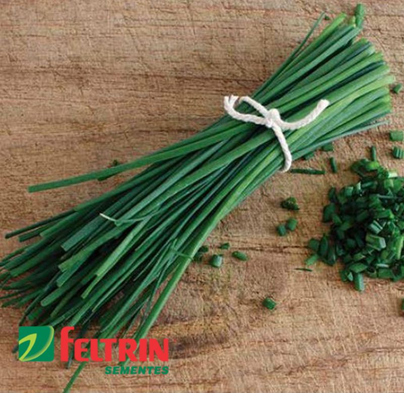 Sementes de Cebolinha Verde Fina - Feltrin
