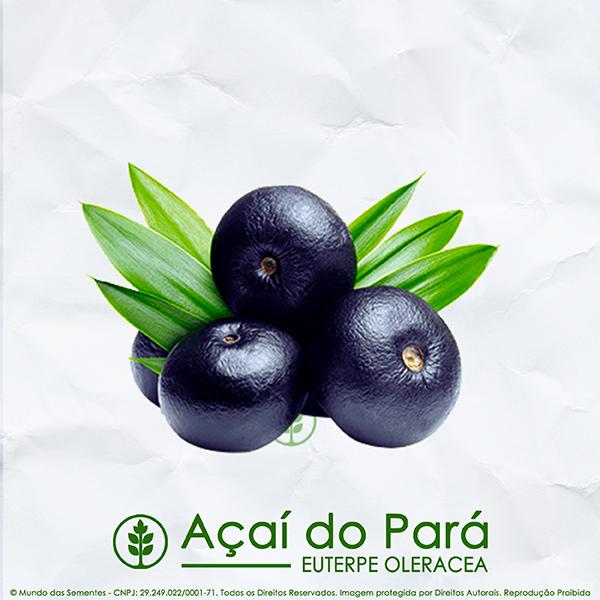 Sementes de Açaí do Pará  - Euterpe oleracea - Frutífera - Mundo das Sementes