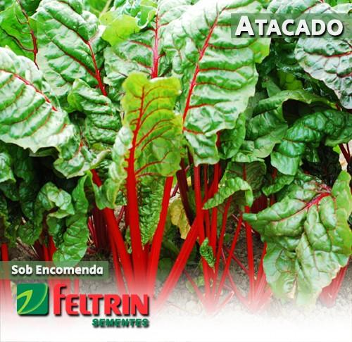 Sementes de Acelga Mérida - Atacado - Feltrin