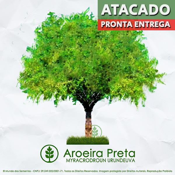 Sementes de Aroeira Preta Verdadeira - Myracrodruon urundeuva - Pronta Entrega - Mundo das Sementes