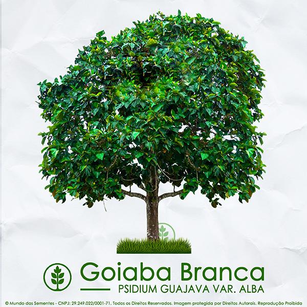 Sementes de Goiaba Branca - Psidium guajava var. Alba - Árvore - Mundo das Sementes