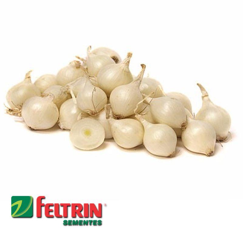 Sementes de Cebola Branca de Conserva - Atacado - Feltrin