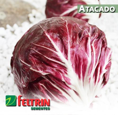 Sementes de Chicória Palla Rossa (Radicchio) - Atacado - Feltrin