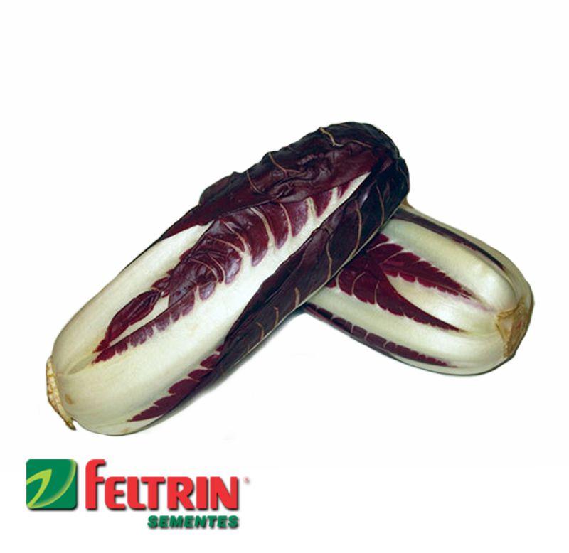Sementes de Chicória Rossa Di Piemonte - Atacado - Feltrin