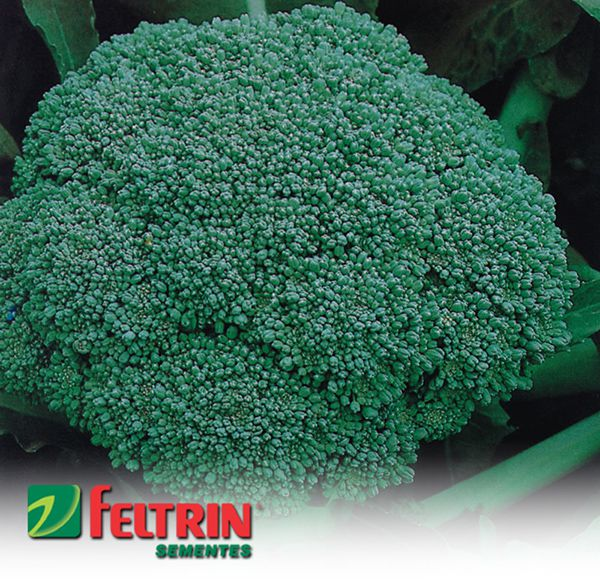 Sementes de Couve Brócolis Calabrês De Cabeça - Atacado - Feltrin