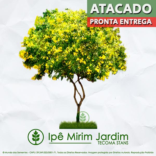 Sementes de Ipê Mirim de Jardim (Árvore) - Tecoma stans - Pronta Entrega - Mundo das Sementes
