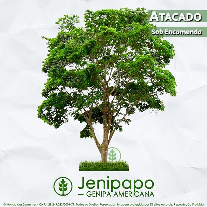 Sementes de Jenipapo - Genipa americana - Atacado - Mundo das Sementes