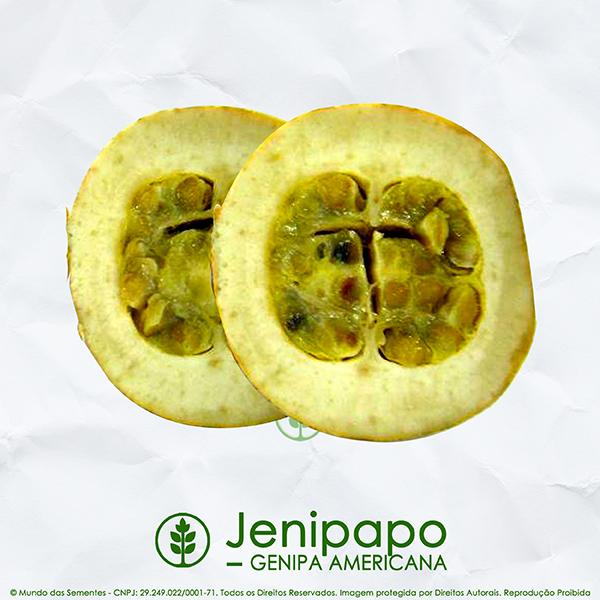 Sementes de Jenipapo - Genipa americana - Mundo das Sementes