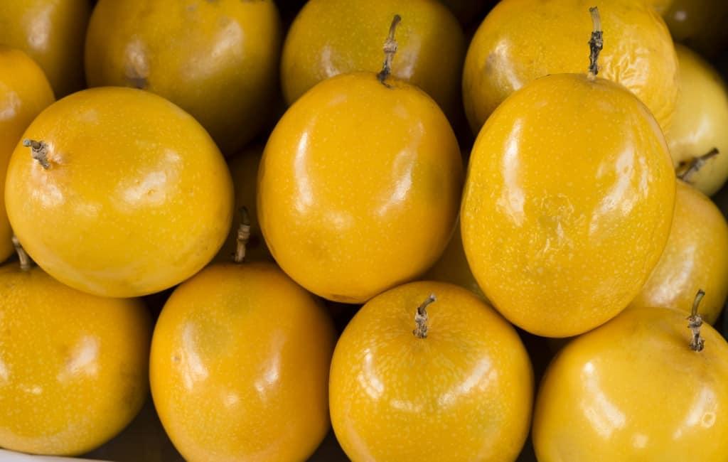Sementes de Maracujá Amarelo - Passiflora edulis - Cerca Viva - Pronta Entrega -  Mundo das Sementes
