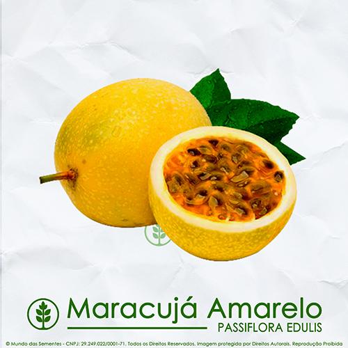 Sementes de Maracujá Amarelo - Passiflora edulis - Flores - Mundo das Sementes