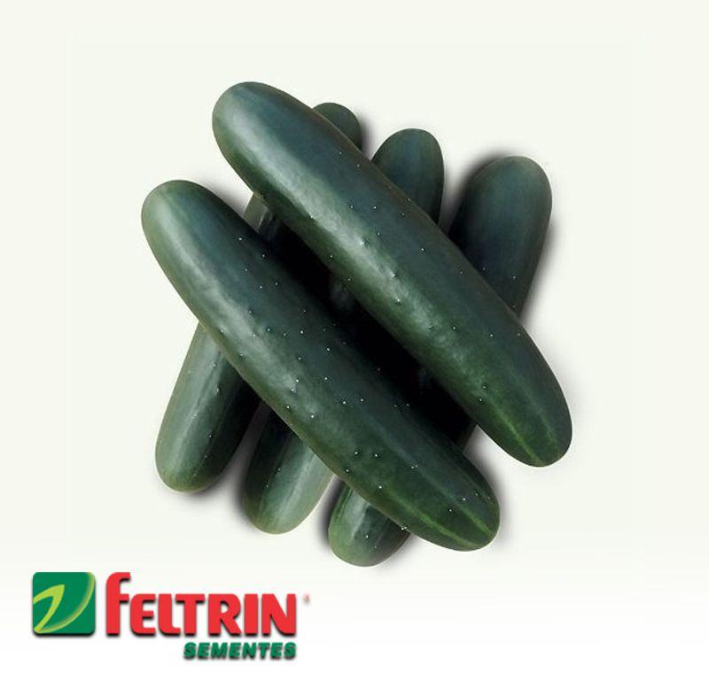 Sementes de Pepino Verde Comprido - Atacado -  Feltrin