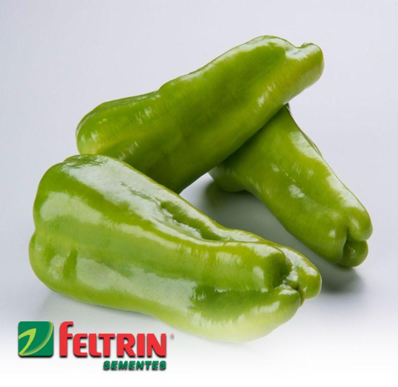 Sementes de Pimenta Cubanela - Atacado - Feltrin
