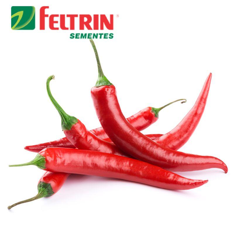 Sementes de Pimenta Malagueta - Feltrin