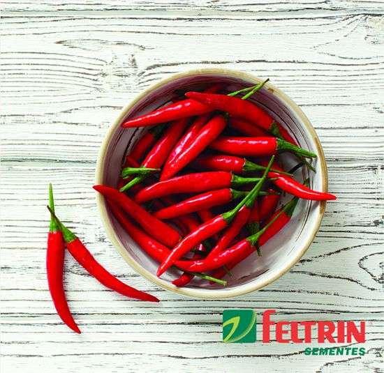 Sementes de Pimenta Malaguetinha Hot Pepper - Feltrin