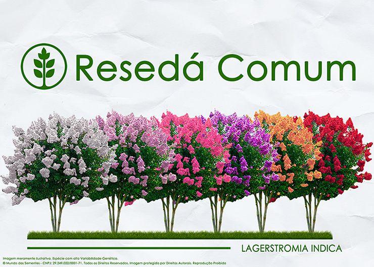 Sementes de Resedá Comum - Lagerstroemia indica - Mundo das Sementes