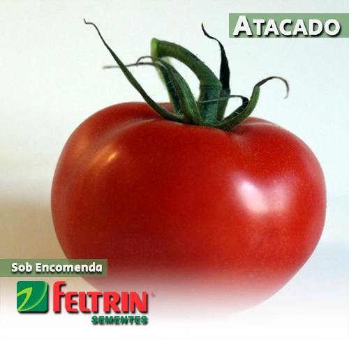 Sementes de Tomate Bagé - Atacado - Feltrin