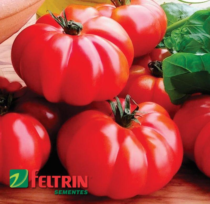 Sementes de Tomate Enrugueto - Feltrin