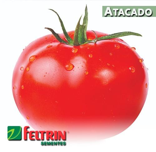 Sementes de Tomate Ícaro - Atacado - Feltrin